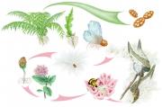 Fern & Milkweed