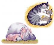 Kitten-Hippos