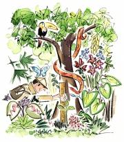 Rainforest, Conde Nast Traveler