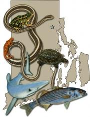 Fishherps