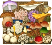Fungi Diversity